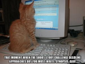 synopsis-cat-staring-at-screen